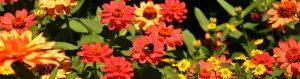 Gartenfreunde Tamm e.V.