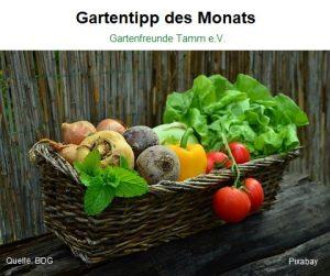 Gartentipp des Monats